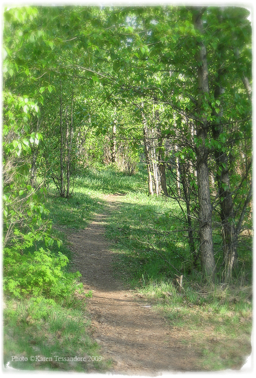 Path_3246