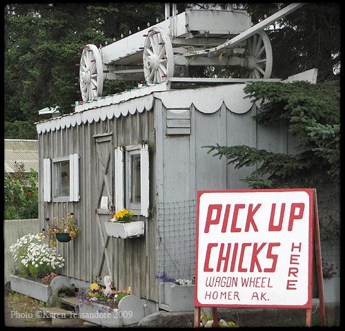 Chicks_4611