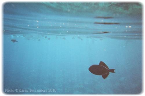 Fish_0022