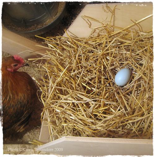 Egg2_7033