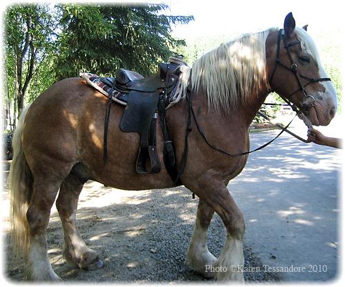 Horse_1080