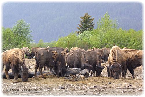 Herd_4353