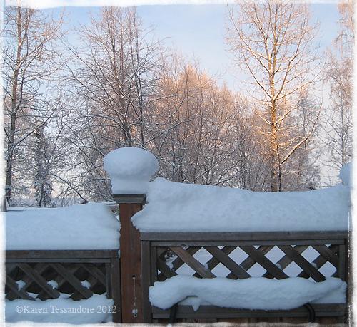 Winter_trees_9133